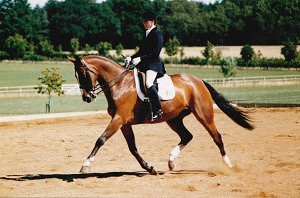 Soloist ridden by Sally Newcomb